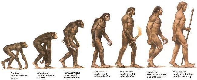 Resultado de imagen para hominidos
