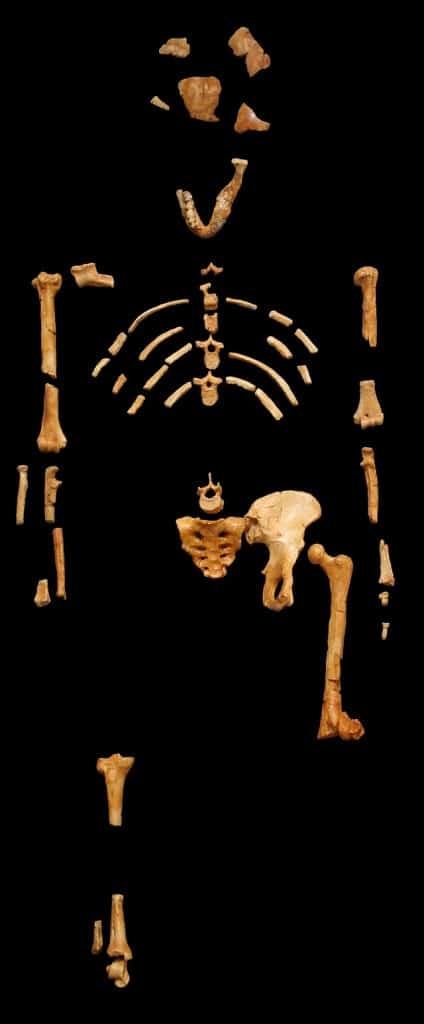 El esqueleto de Lucy