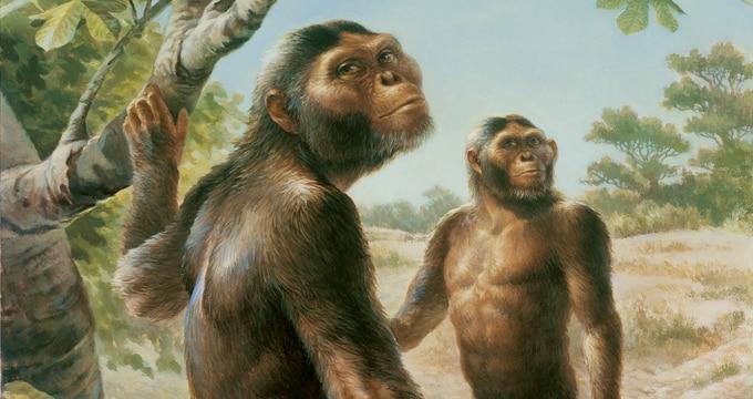 Lucy y otros antepasados de hace 3 millones de años